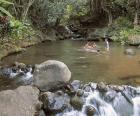Nabídka okružních plaveb - Havajské ostrovy - HAVAJSKÉ OSTROVY